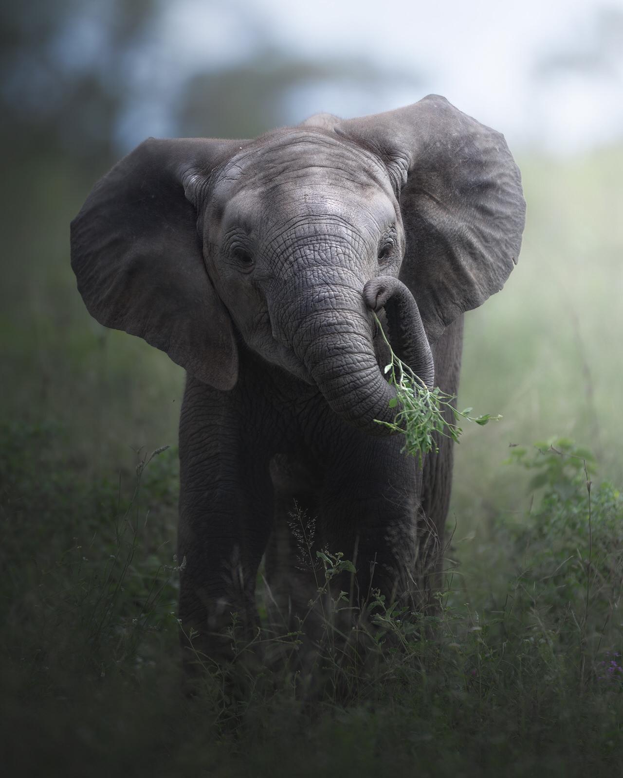 elefante nel kruger national park