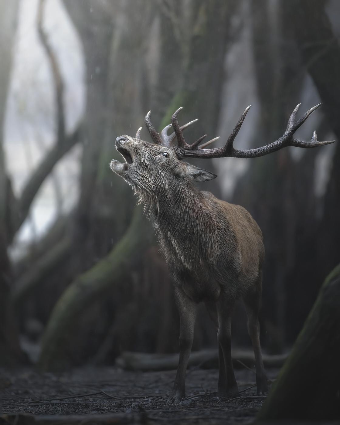 cervo fotografia naturalistica parco nazionale d'abruzzo - Michele Bavassano