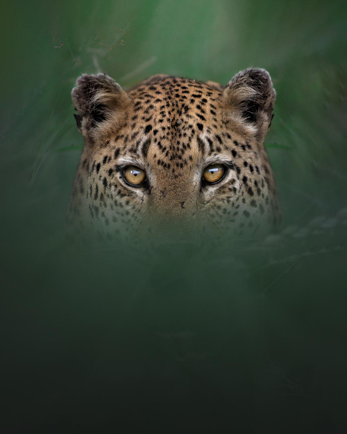 leopardo fotografia naturalistica kruger natioanal park