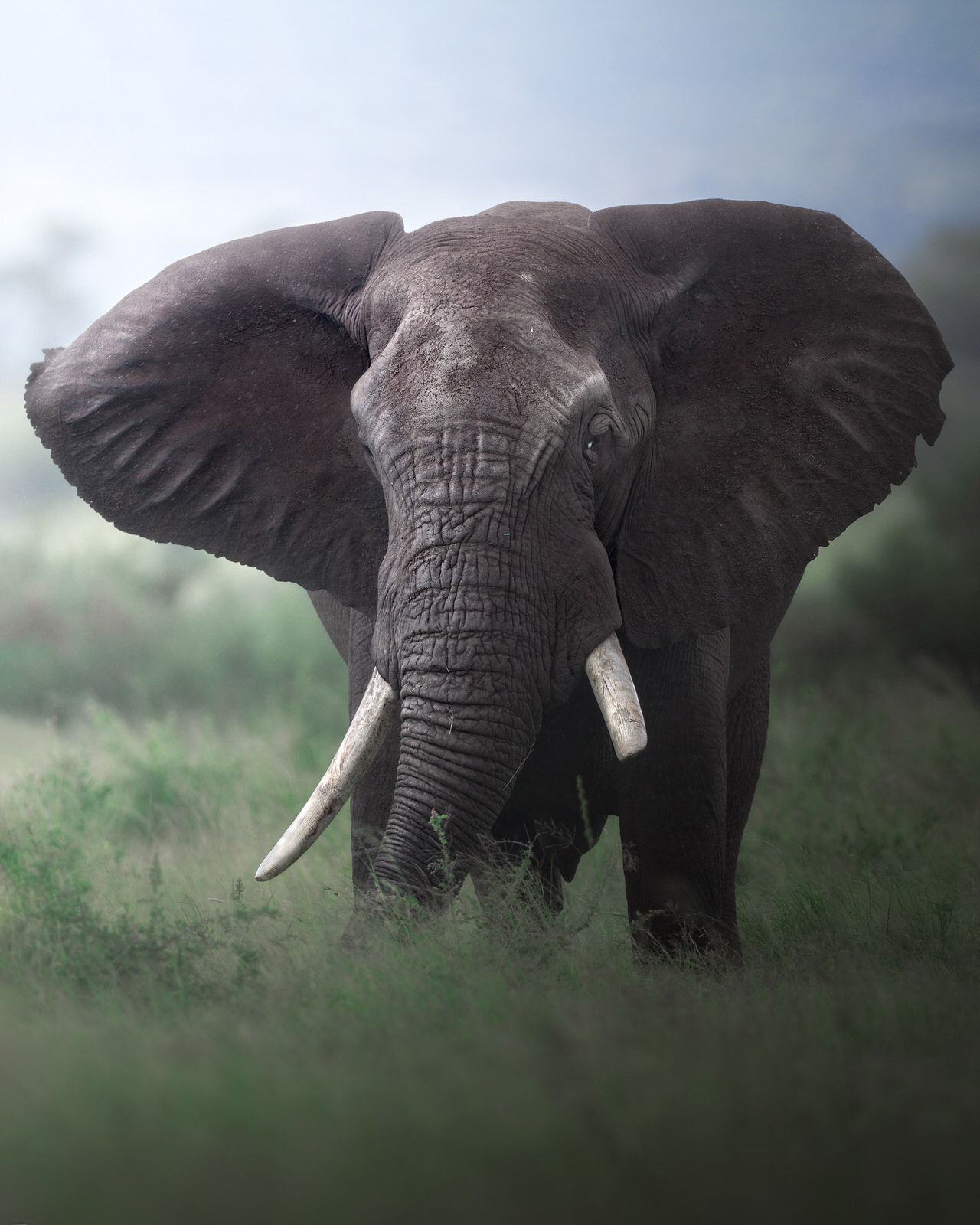 elefante africa kruger fotografia naturalistica