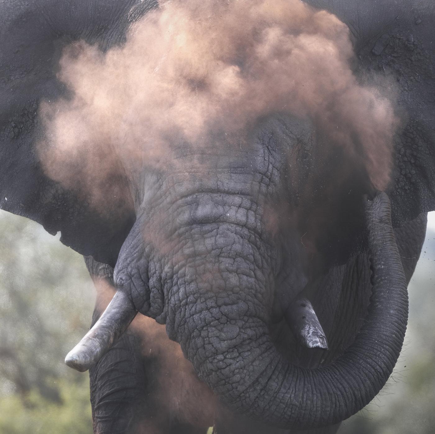 elefante kruger national park fotografia naturalistica