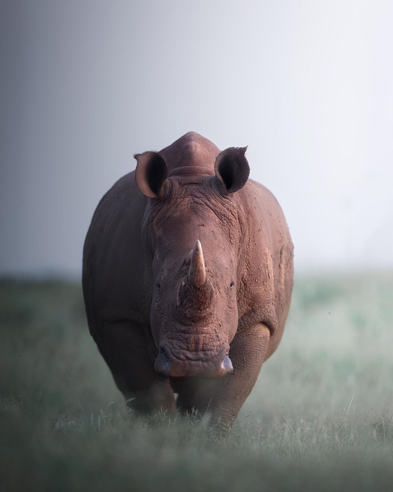 rinoceronte bianco africa fotografia naturalistica