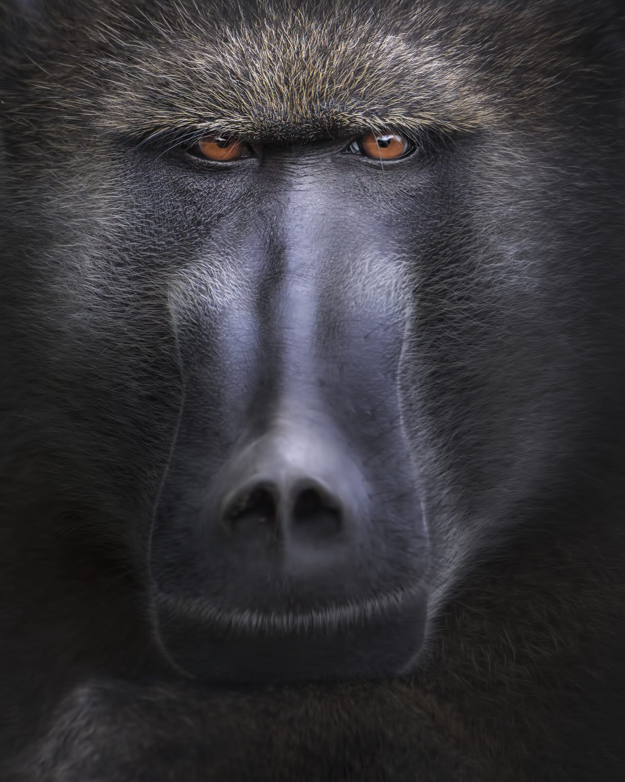 babbuino africa fotografia naturalistica
