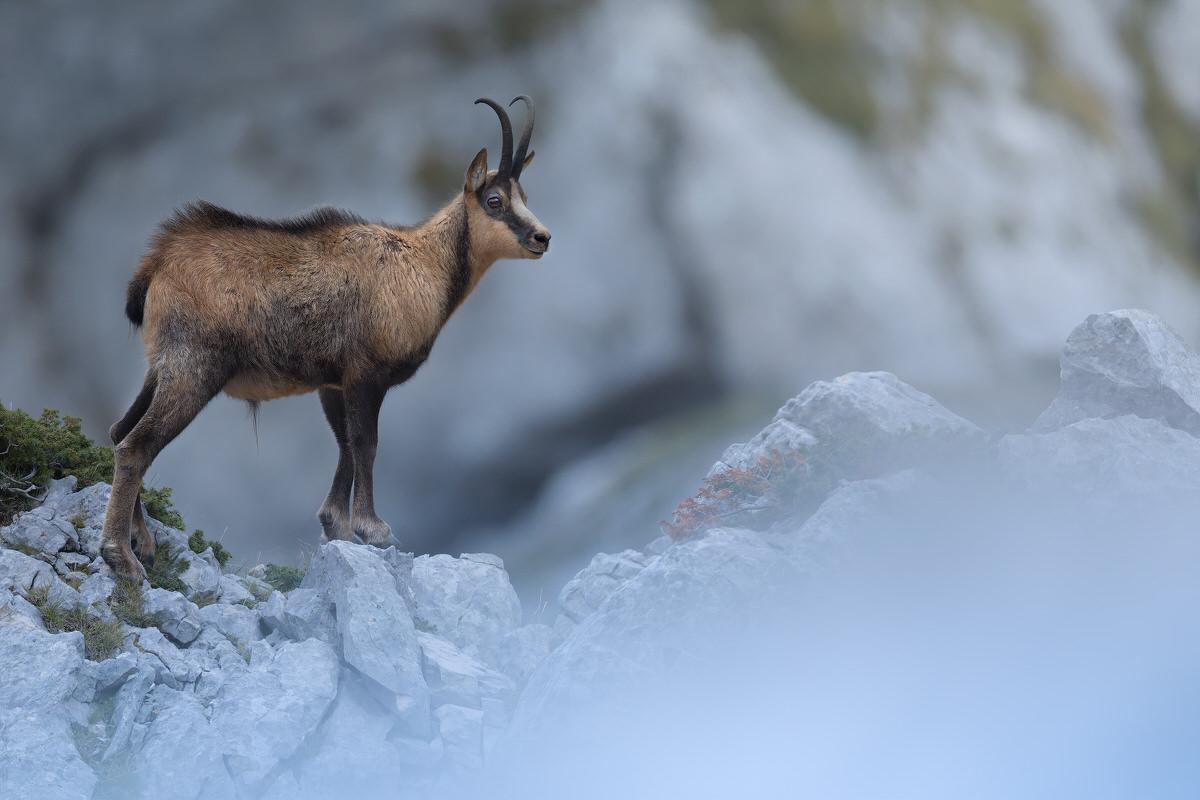 workshop di fotografia naturalistica Parco nazionale d'abruzzo - Michele Bavassano
