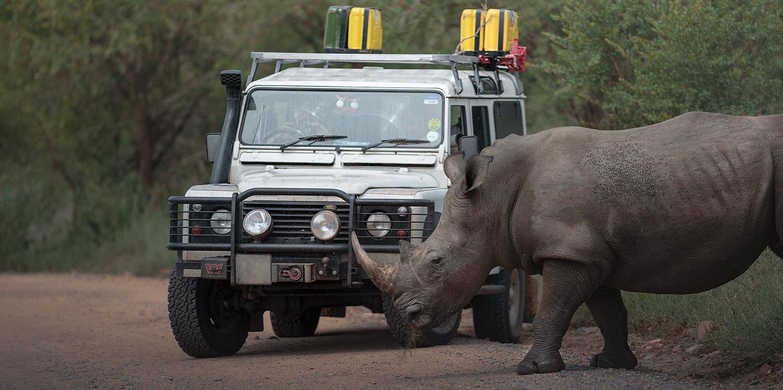 rinoceronte bianco defender kruger national park