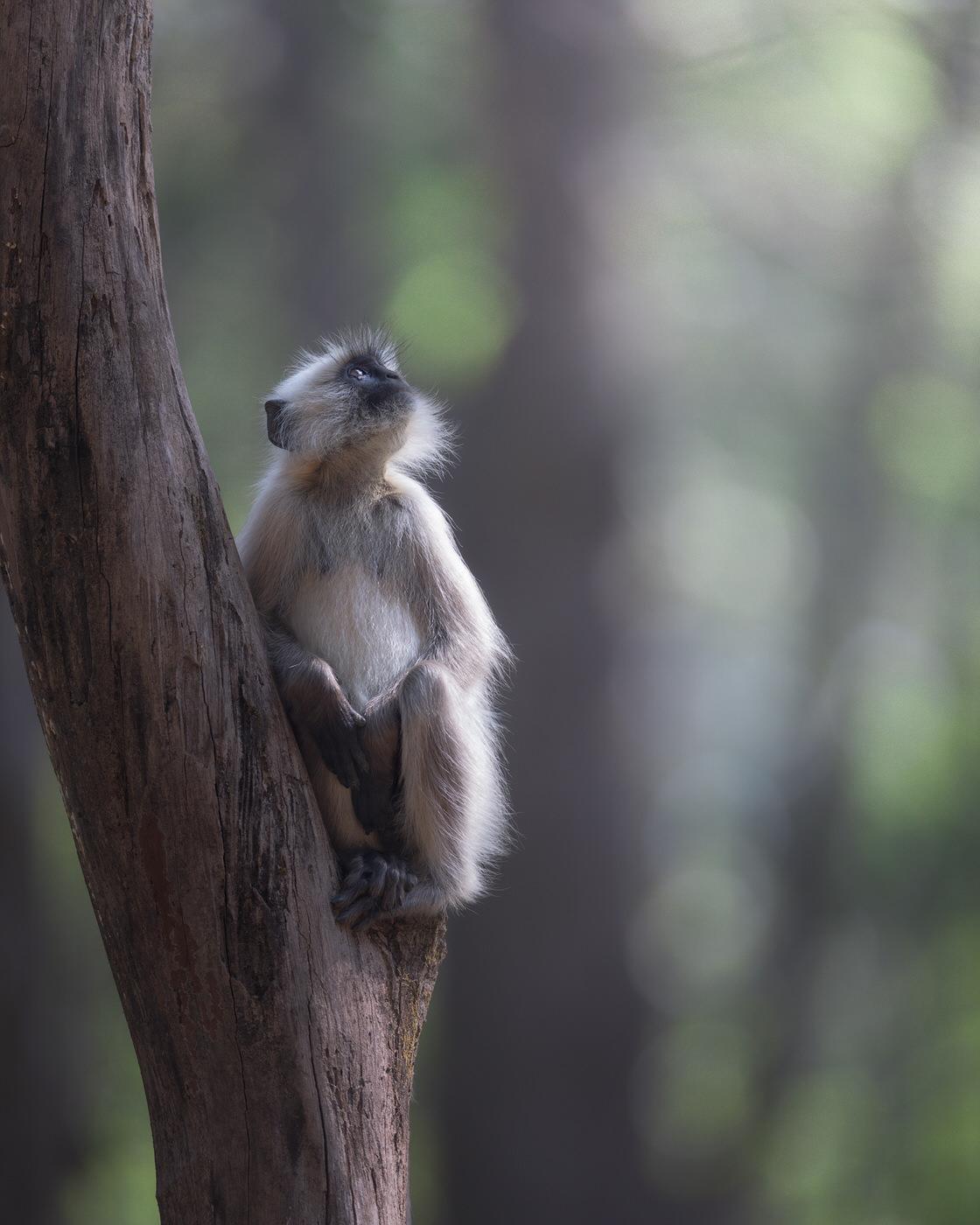 Sciammia India fotografia naturalstica - Michele Bavassano