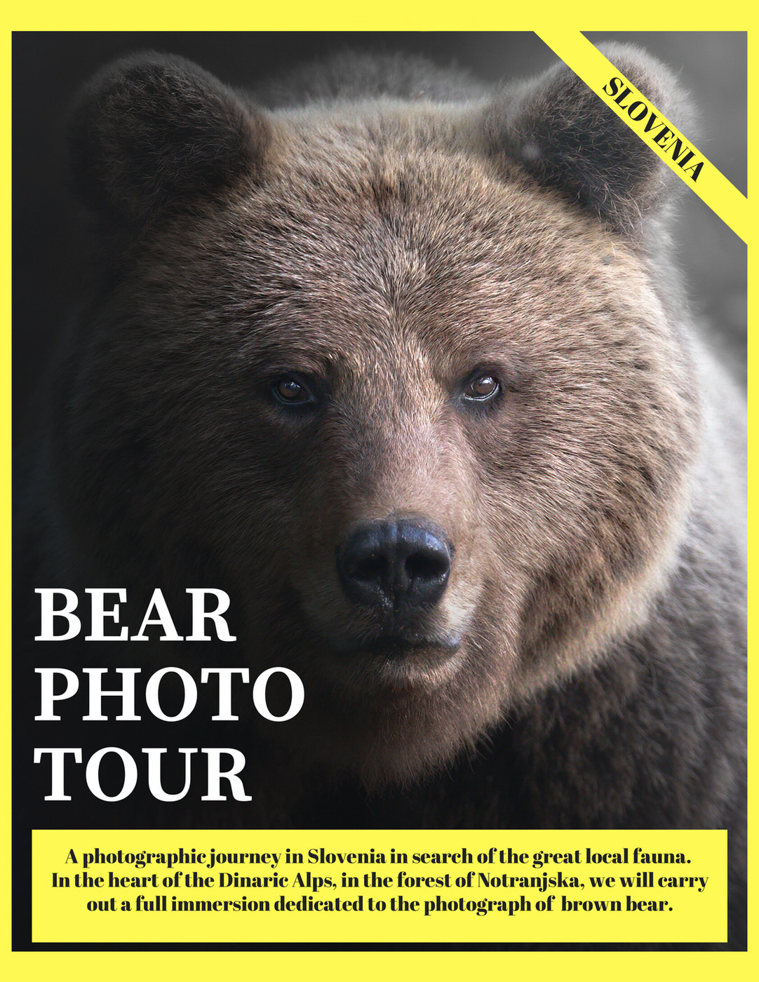 bear photo tour michele bavassano wildlife photography