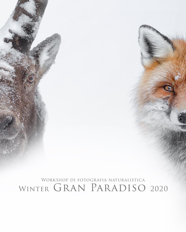 workshop di fotografia naturalistica winter parco nazionale del gran paradiso