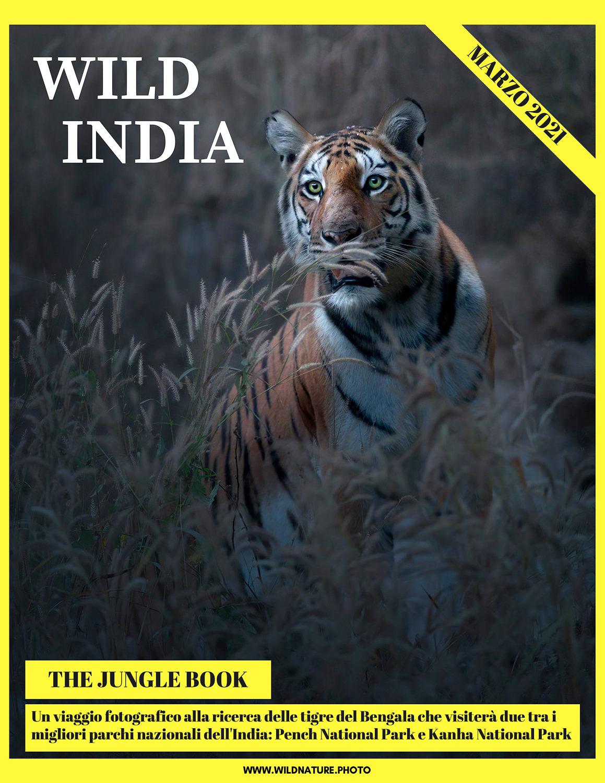 Viaggio fotografico naturalistico India tigre