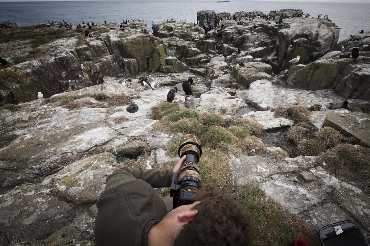 viaggio fotografico in Scozia - Farne Islands