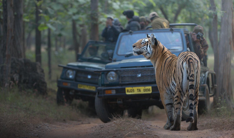 viaggio fotografico india tigre del bengala