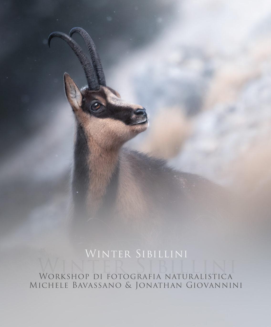 Winter-Sibillini-workshop di fotografia naturalistica