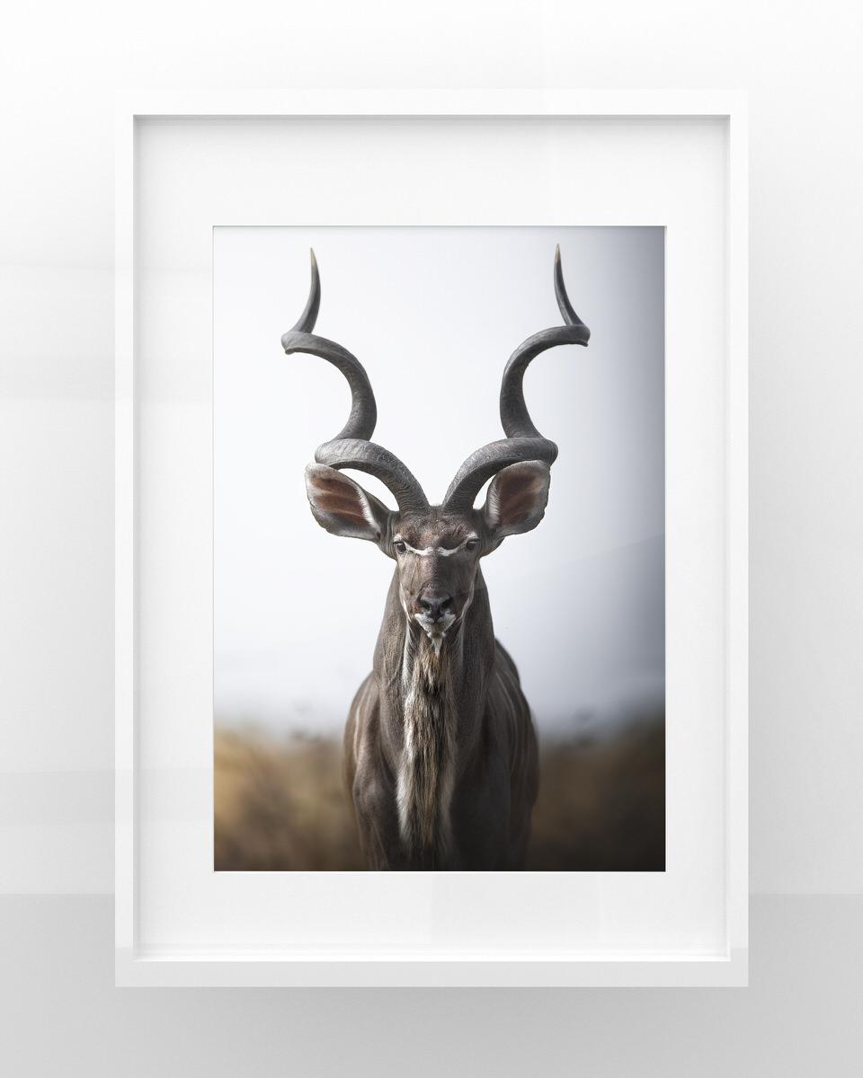 stampa fotografia naturalistica kudu