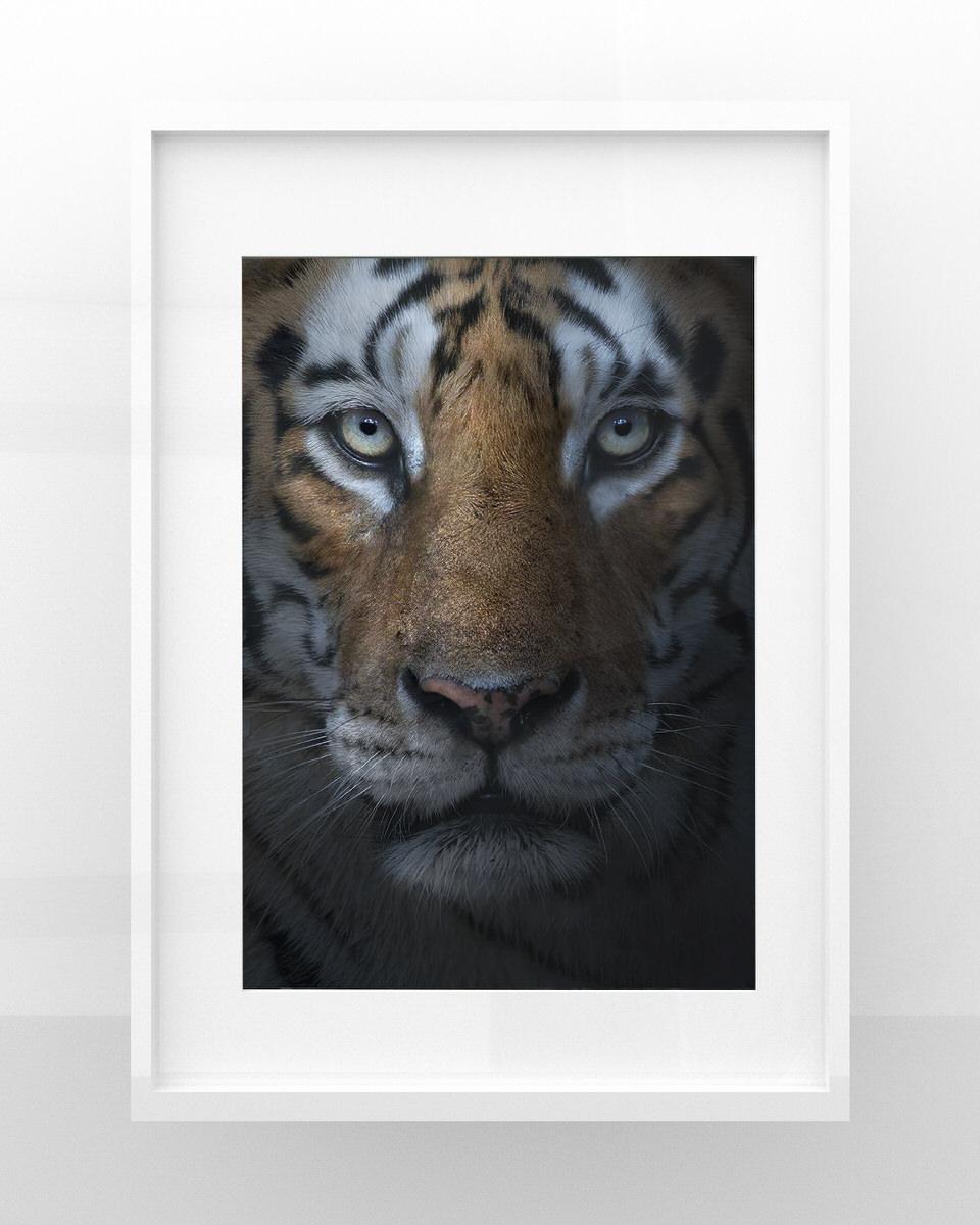 Stampe fotografia naturalistica