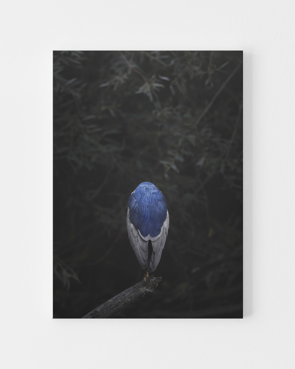 Night Heron limted edition canvas prints