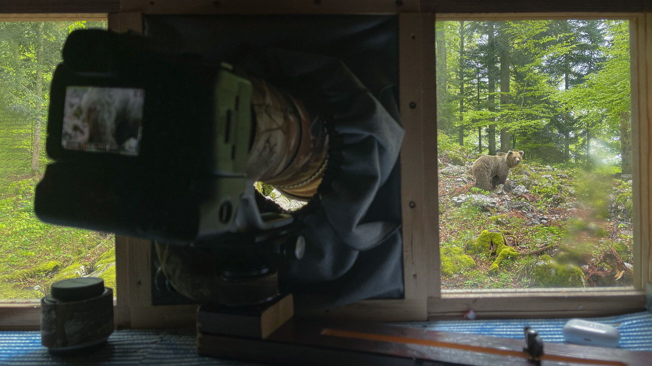 workshop di fotografia naturalistica orso bruno slovenia - Michele Bavassano