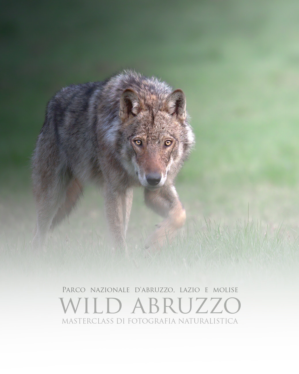 MasterClass di fotografia naturalistica -wild-abruzzo