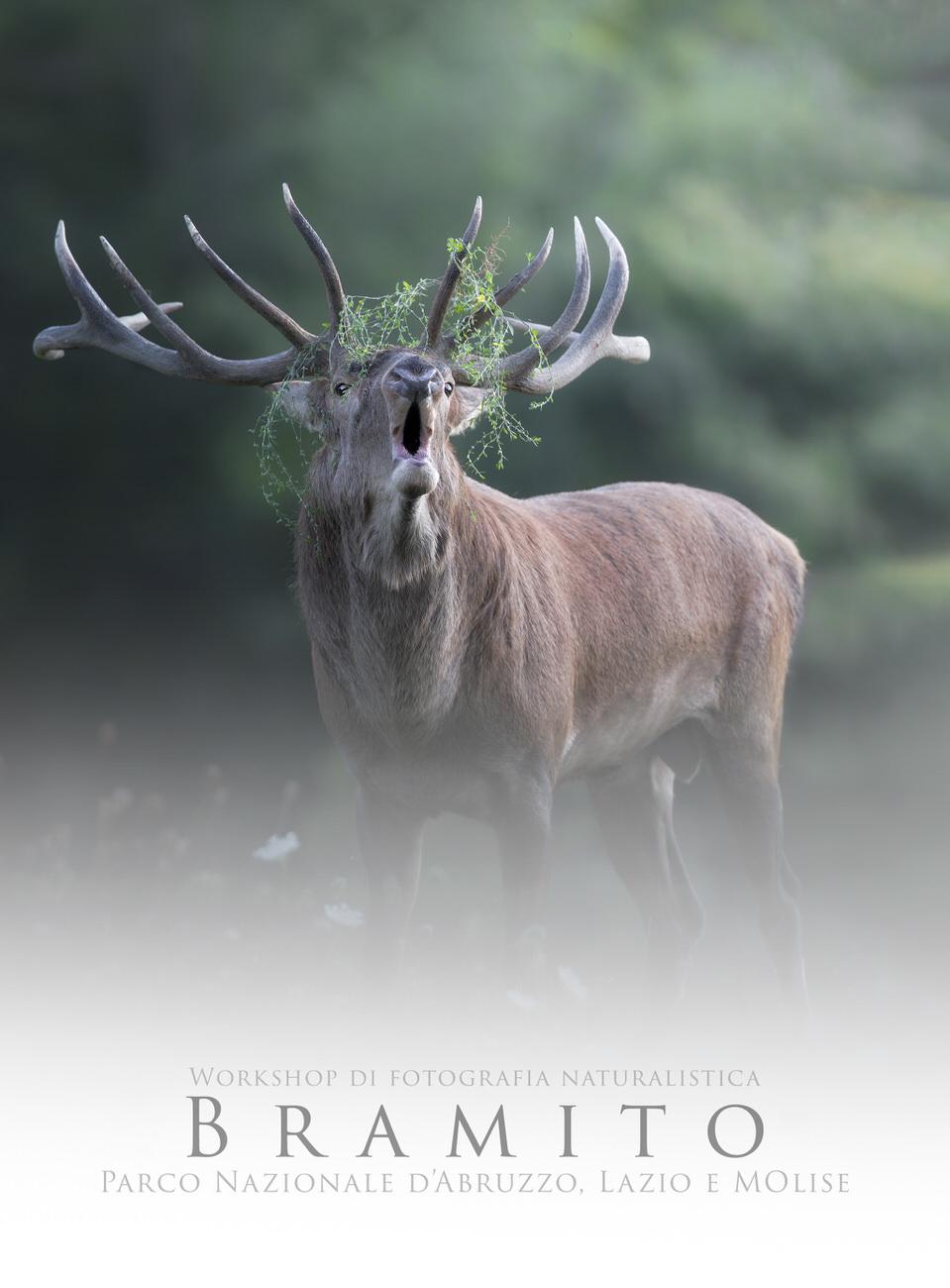 workshop di fotografia naturalistica parco nazionale d'abruzzo bramito - Michele Bavassano