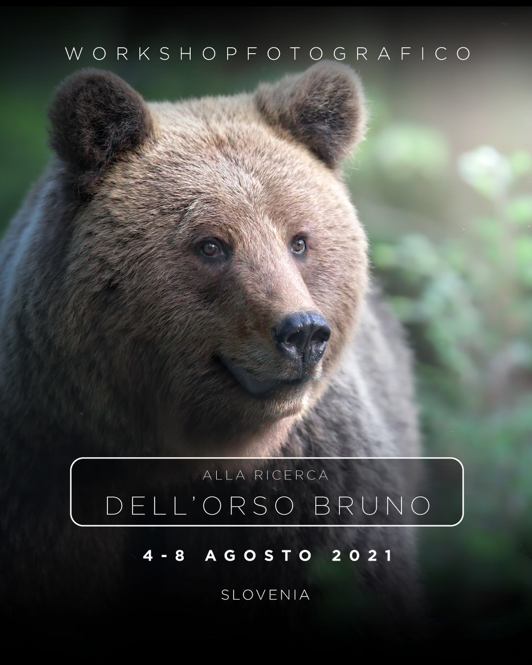 workshop fotografia naturalistica orso bruno michele bavassano