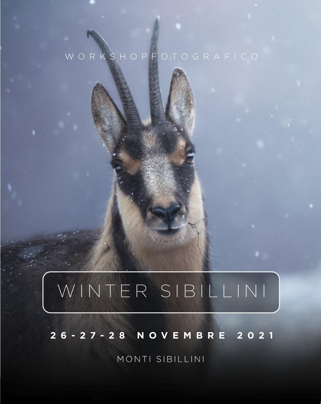 WinterSibillini workshop di fotografia naturalistica